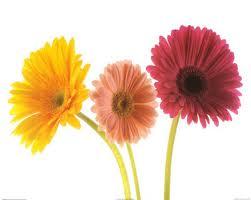 threeflowers