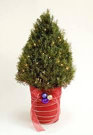 smallxmastree