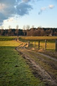 Footpath in Fields