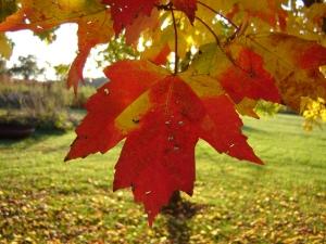leafchange